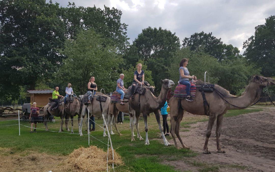 Auf Kamelen durch die Heide